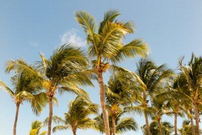 Фотообои Пальмы на фоне прекрасного солнечного света