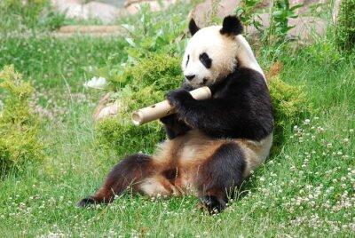 Фотообои Panda 1