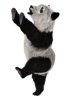 Фотообои Panda Bear Cub
