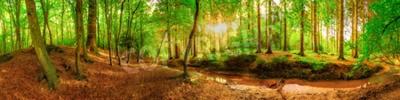 Фотообои Панорама идиллического леса с ручью на рассвете