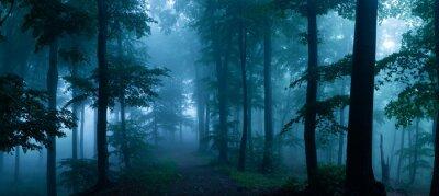 Фотообои Панорама туманного леса. Сказочные жуткий лес в туманный день. Холодное туманное утро в лесу ужаса