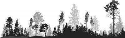 Фотообои Панорама высоких серых еловых лесов на белом