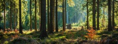 Фотообои Панорамный Солнечный Лес осенью