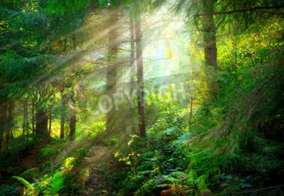 Фотообои Парк. Красивые туманное старого леса
