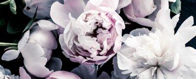 Фотообои Pastel peony flowers as floral art background, botanical flatlay and luxury branding design