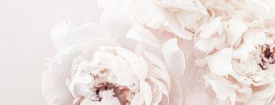 Фотообои Pastel peony flowers in bloom as floral art background, wedding decor and luxury branding design