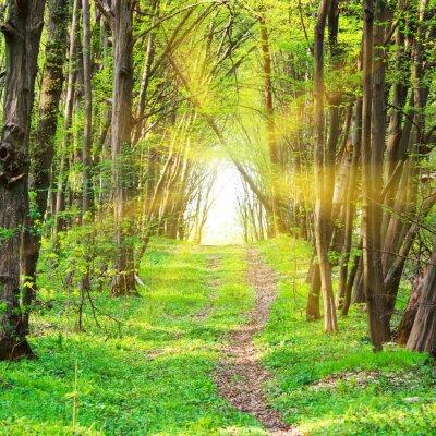 Фотообои Путь в красивом зеленом парке