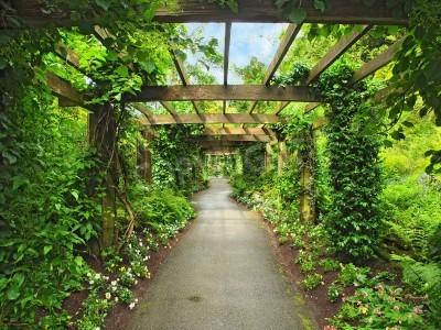 Фотообои Пергола проход в саду, в окружении глицинии и вьющихся растений
