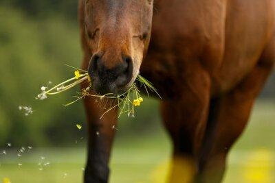 Фотообои Pferdemaul frißt