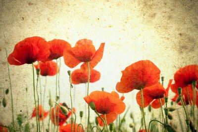 Фотообои Фотография маки цветы