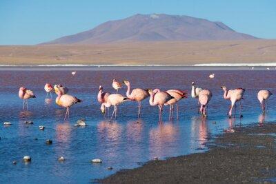 Фотообои Розовые фламинго в