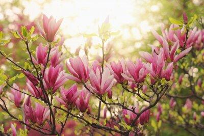 Фотообои розовые магнолии