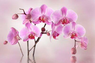 Фотообои Розовые орхидеи цветок фона