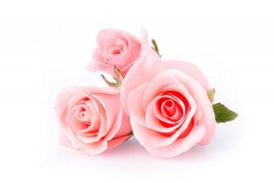 Фотообои розовый цветок розы на белом фоне