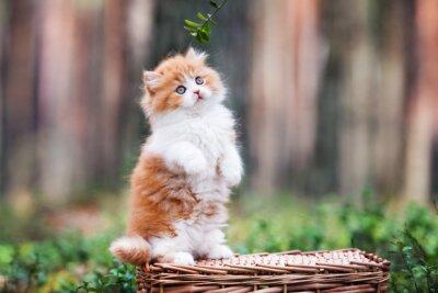 Фотообои игривый пушистый котенок в лесу