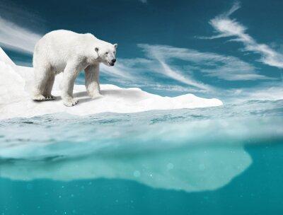 Фотообои Полярный Медведь