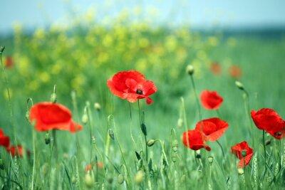 Фотообои маки цветок пейзаж весенний сезон