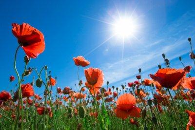 Фотообои Мак цветок