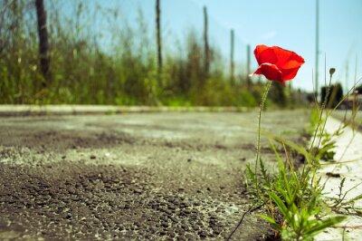 Фотообои Мак цветок в бетоне: сила концепции жизни