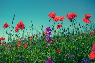 Фотообои Мака цветы на фоне неба
