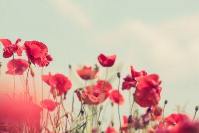 Фотообои Маки ретро мирное фон лето