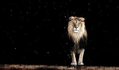 Фотообои Портрет красивый лев, геометрический узор