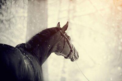 Фотообои Портрет спортивной лошади