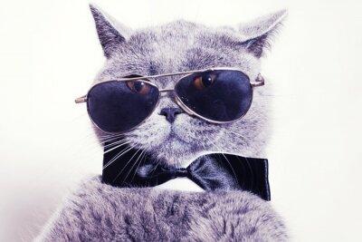 Фотообои Portrait of British shorthair gray cat wearing sunglasses