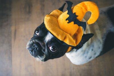 Фотообои Портрет Французский бульдог в шляпе Хэллоуин