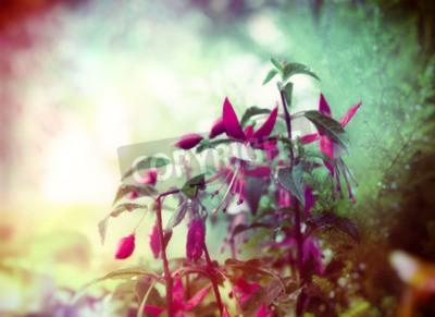 Фотообои Довольно Фуксия цветы на летний сад фоне крупным планом тонированное