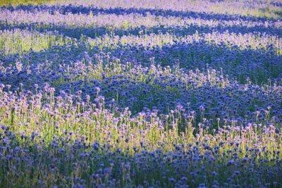 Фотообои Фиолетовый цветок поле