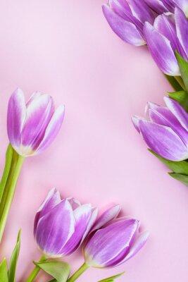Фотообои Фиолетовый тюльпаны на фоне розовый