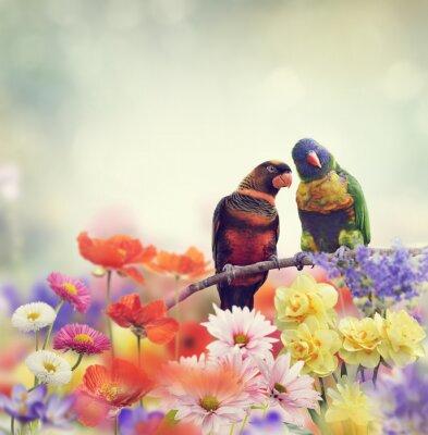 Фотообои Радуга Попугаи (Радуга Lorikeet)