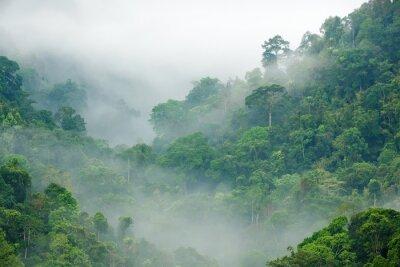 Фотообои леса утренний туман