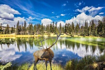 Фотообои Красный олень с ветвистыми рогами стоит на очаровательной озера