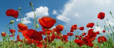 Фотообои Красный мак и облака