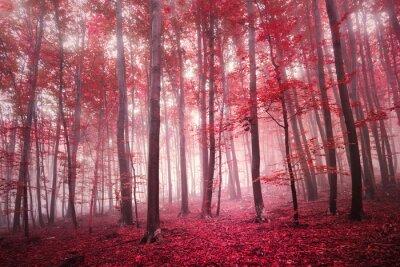 Фотообои Красный насыщенный мистическую осенний сезон бук лесной пейзаж. Красный цвет фильтра используется тон.