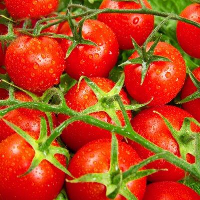 Фотообои красные помидоры