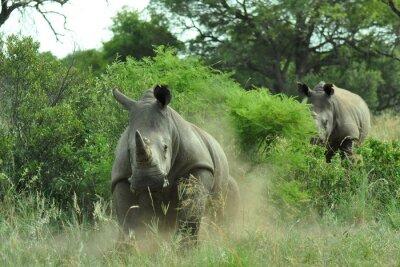 Фотообои Rhino зарядка