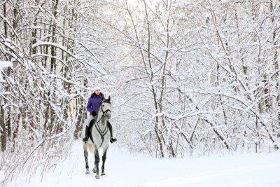 Фотообои Всадник на лошади на краю заснеженных леса в зимний период