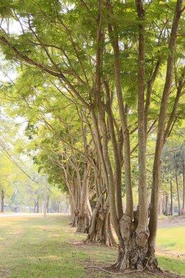 Фотообои Дорога в саду