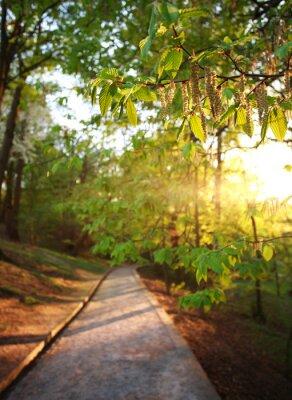 Фотообои Дорога в зеленом парке города, освещенные лучами заката
