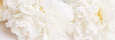 Фотообои Romantic banner, delicate white peonies flowers close-up. Fragrant pink petals