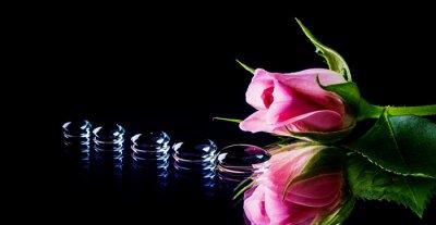 Фотообои роза и капли