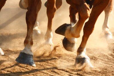 Фотообои Бегущие лошади Копыта