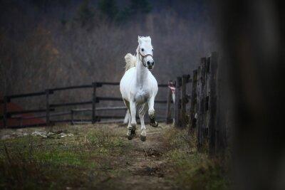 Фотообои Запуск белой лошади