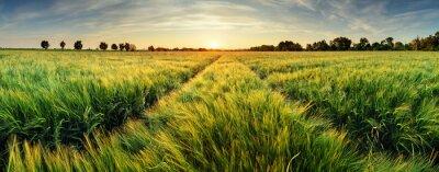 Фотообои Сельский пейзаж с пшеничного поля на закате