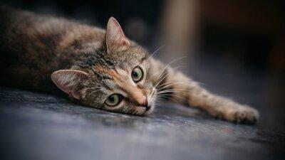 Фотообои Сад полосатый кот с белыми усами