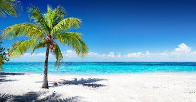 Фотообои Живописный пляж Корал с пальмой
