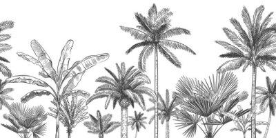 Фотообои Seamless horizontal tropical background. Hand drawn palm trees, sketch exotic tropic jungle leaves and paradise palm tree vector wallpaper illustration. Exotic palm tree botanical, rainforest foliage